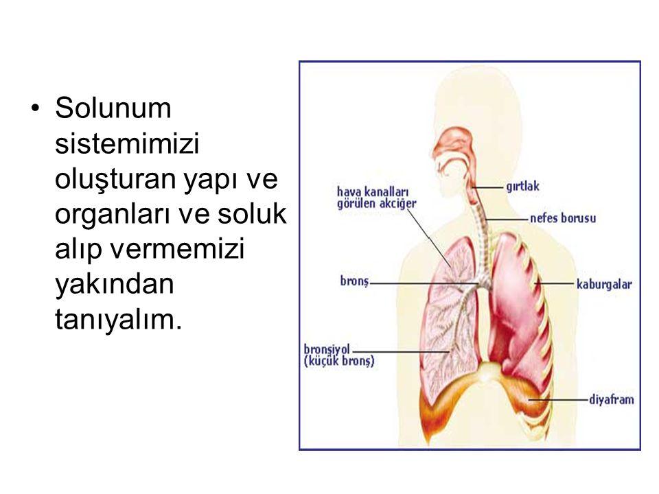 Solunum sistemimizi oluşturan yapı ve organları ve soluk alıp vermemizi yakından tanıyalım.