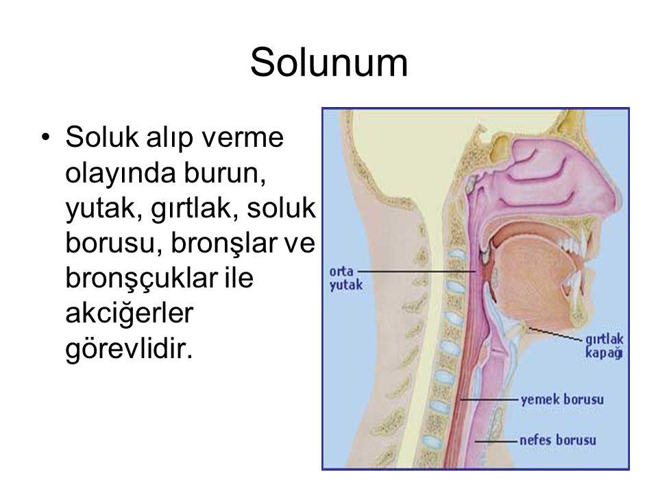 Diyafram ve kaslar arasında bulunan kaslar da soluk alıp verme olayına yardımcı olur.