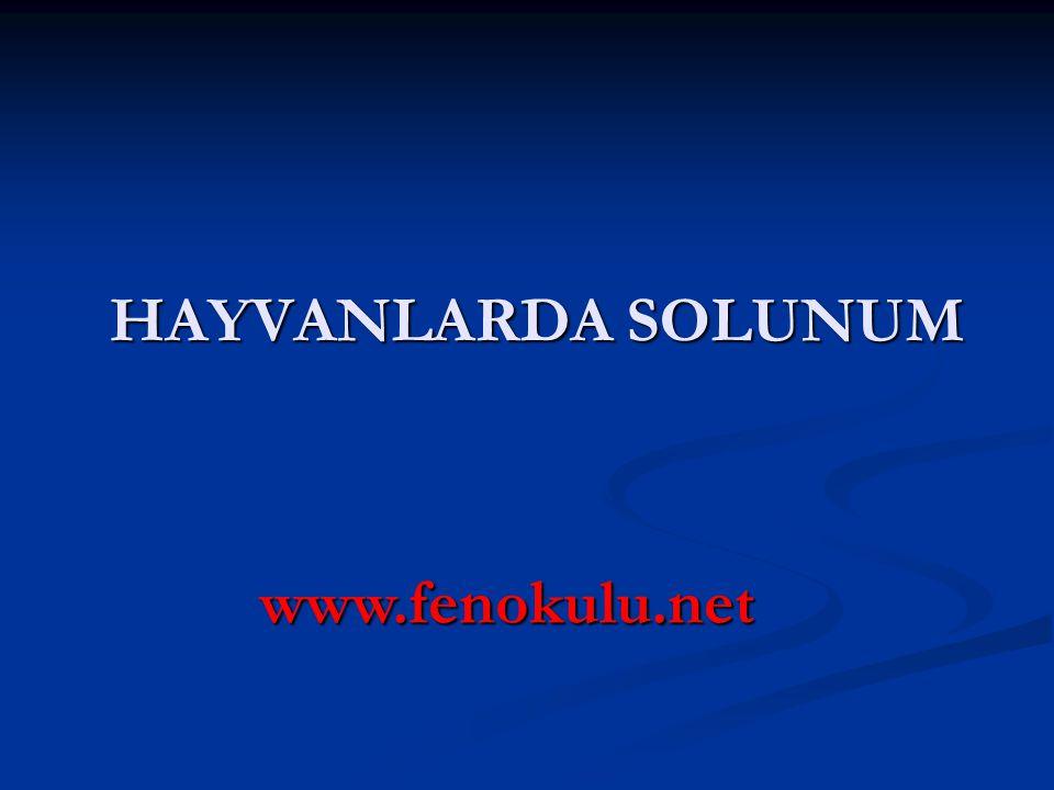 HAYVANLARDA SOLUNUM www.fenokulu.net