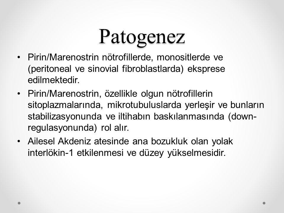 Patogenez Pirin/Marenostrin nötrofillerde, monositlerde ve (peritoneal ve sinovial fibroblastlarda) eksprese edilmektedir. Pirin/Marenostrin, özellikl
