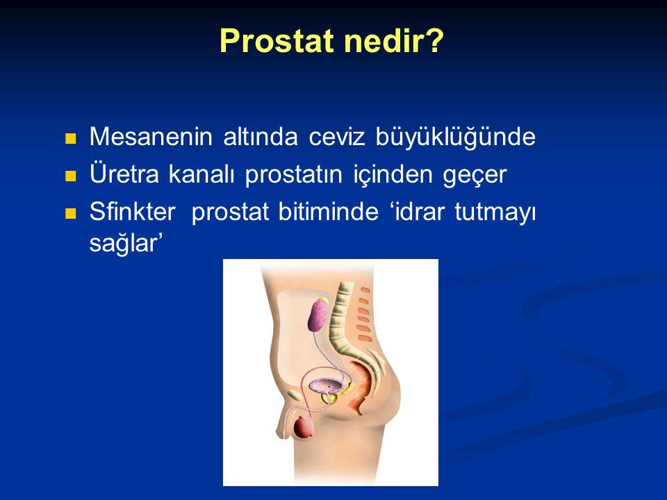 Prostat nedir? Mesanenin altında ceviz büyüklüğünde Üretra kanalı prostatın içinden geçer Sfinkter prostat bitiminde 'idrar tutmayı sağlar'