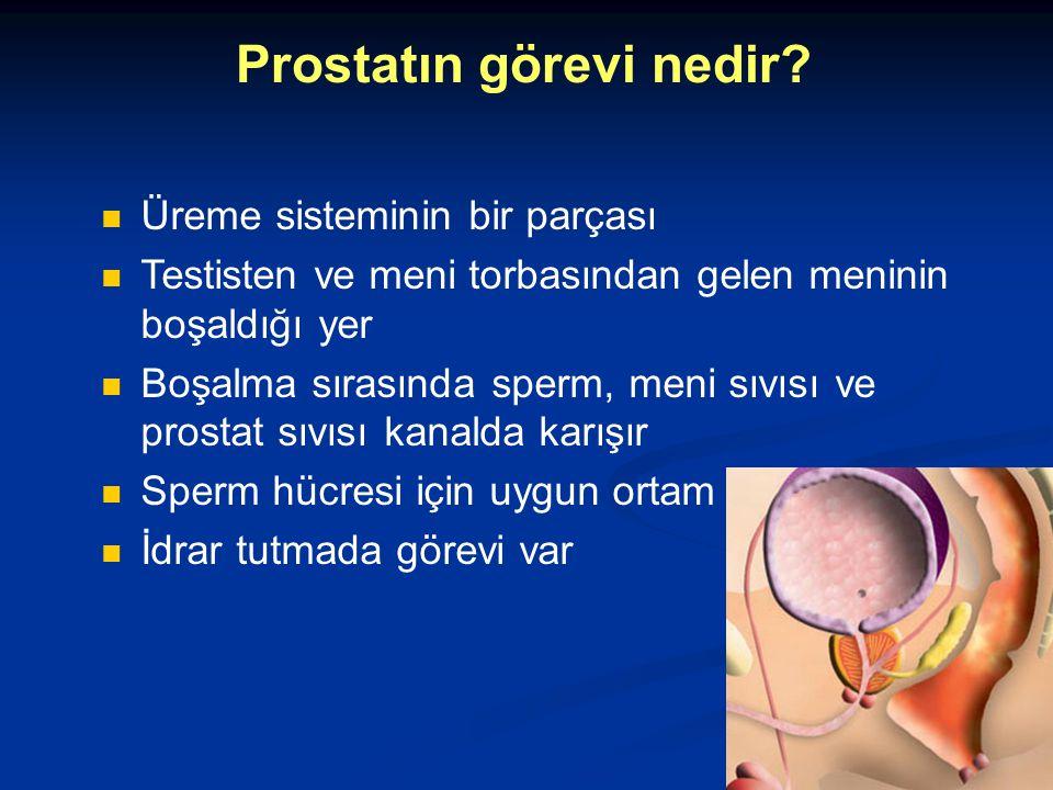 Prostatın görevi nedir? Üreme sisteminin bir parçası Testisten ve meni torbasından gelen meninin boşaldığı yer Boşalma sırasında sperm, meni sıvısı ve