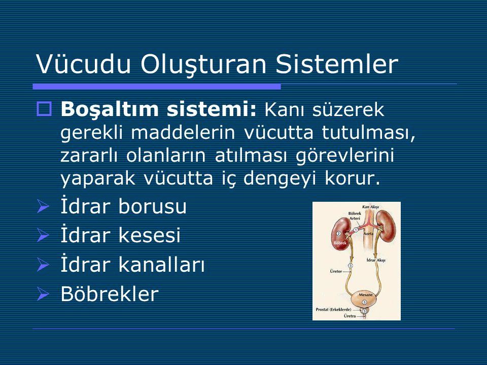 Vücudu Oluşturan Sistemler  Boşaltım sistemi: Kanı süzerek gerekli maddelerin vücutta tutulması, zararlı olanların atılması görevlerini yaparak vücut