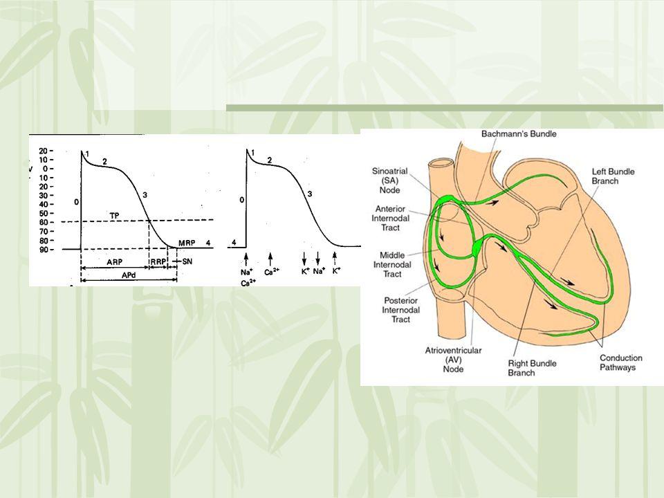 Hiperkalsemi QT intervalinde kısalma Digoksin tehlikeli –Taşi-bradiaritmi yapabilir.