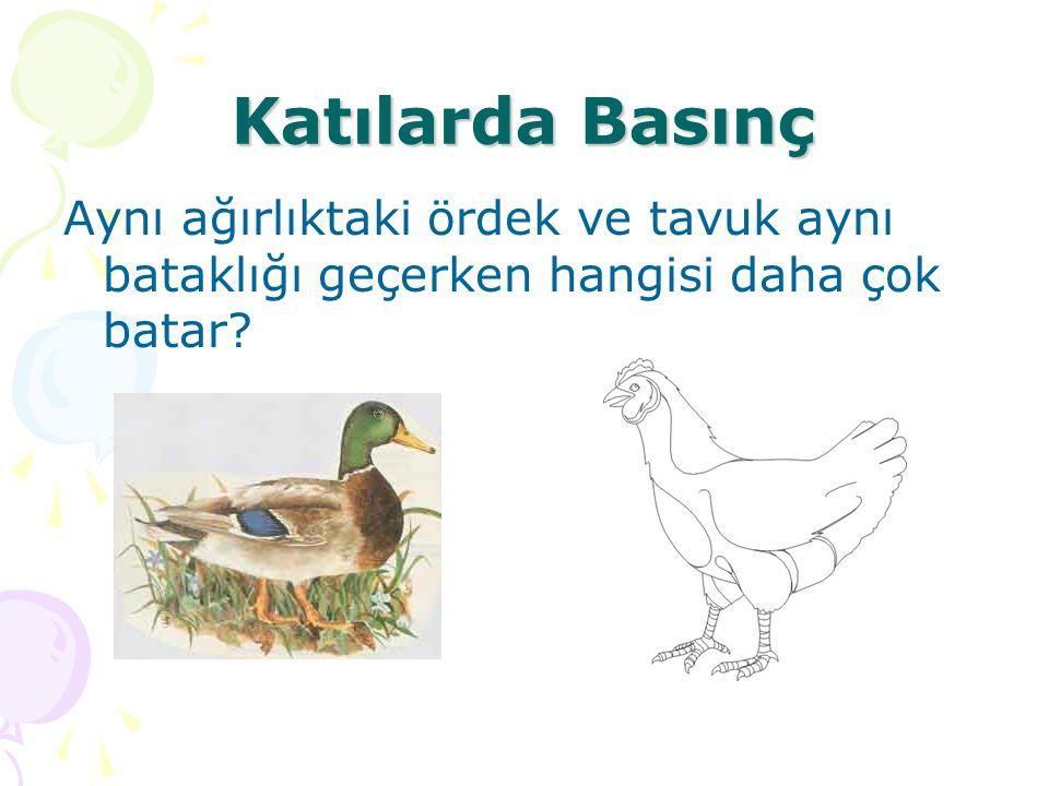 Katılarda Basınç Aynı ağırlıktaki ördek ve tavuk aynı bataklığı geçerken hangisi daha çok batar?