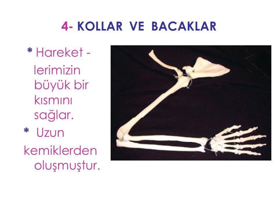 4- KOLLAR VE BACAKLAR * Hareket - lerimizin büyük bir kısmını sağlar. * Uzun kemiklerden oluşmuştur.