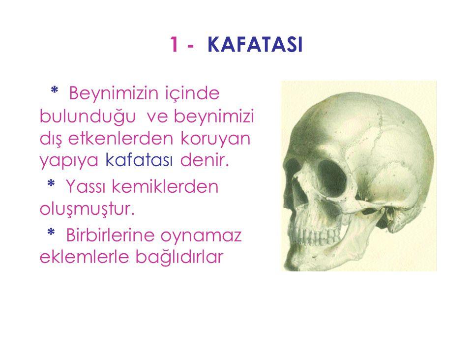 1 - KAFATASI * Beynimizin içinde bulunduğu ve beynimizi dış etkenlerden koruyan yapıya kafatası denir. * Yassı kemiklerden oluşmuştur. * Birbirlerine