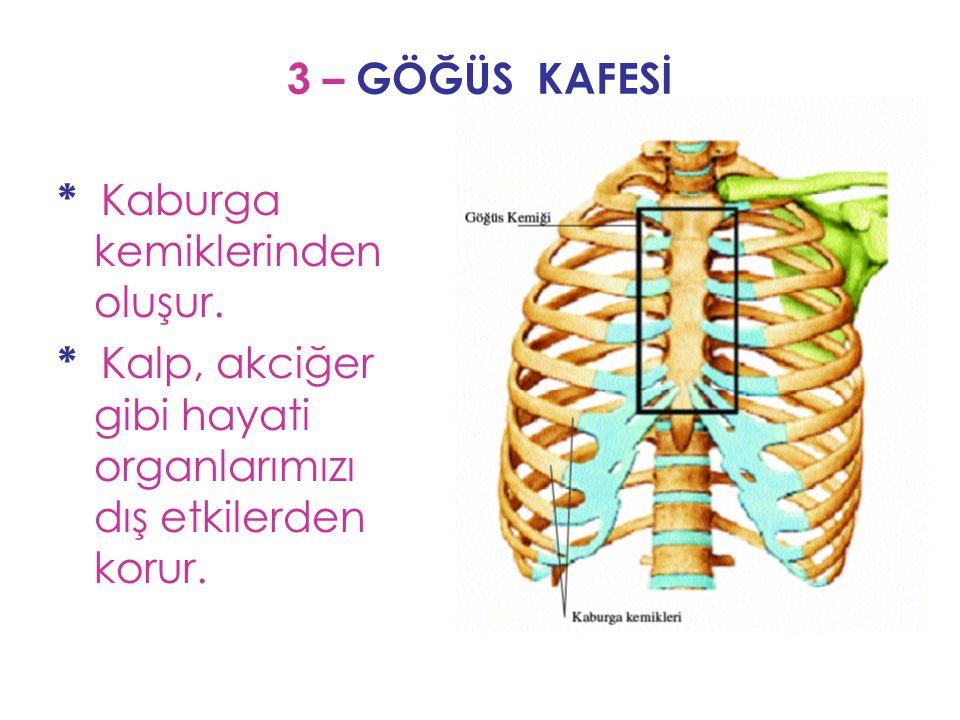 3 – GÖĞÜS KAFESİ * Kaburga kemiklerinden oluşur. * Kalp, akciğer gibi hayati organlarımızı dış etkilerden korur.