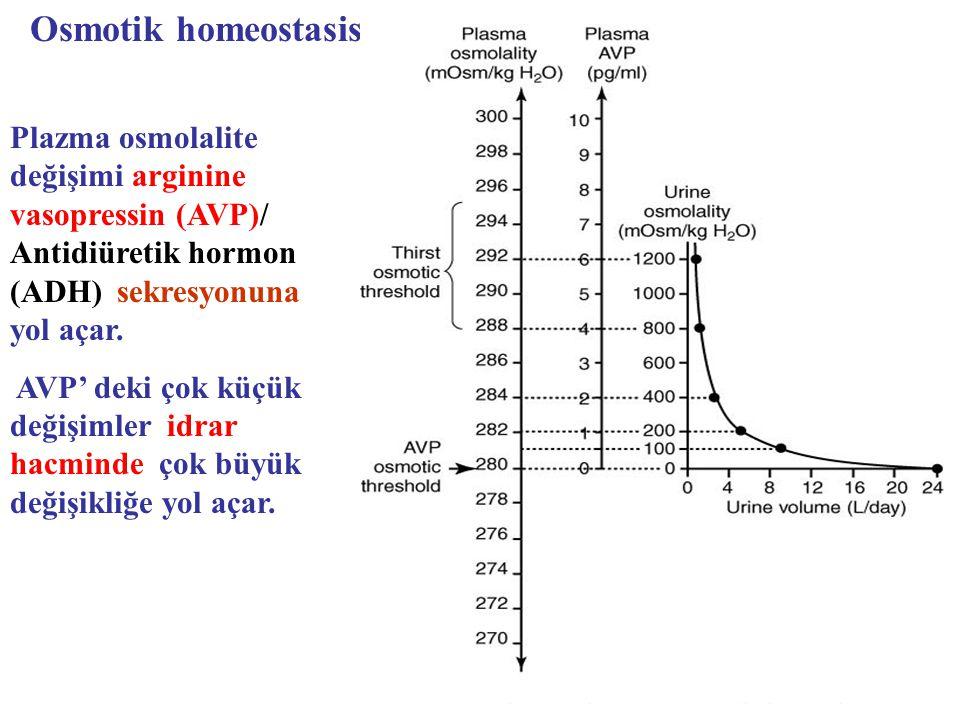 Plazma osmolalite değişimi arginine vasopressin (AVP)/ Antidiüretik hormon (ADH) sekresyonuna yol açar. AVP' deki çok küçük değişimler idrar hacminde