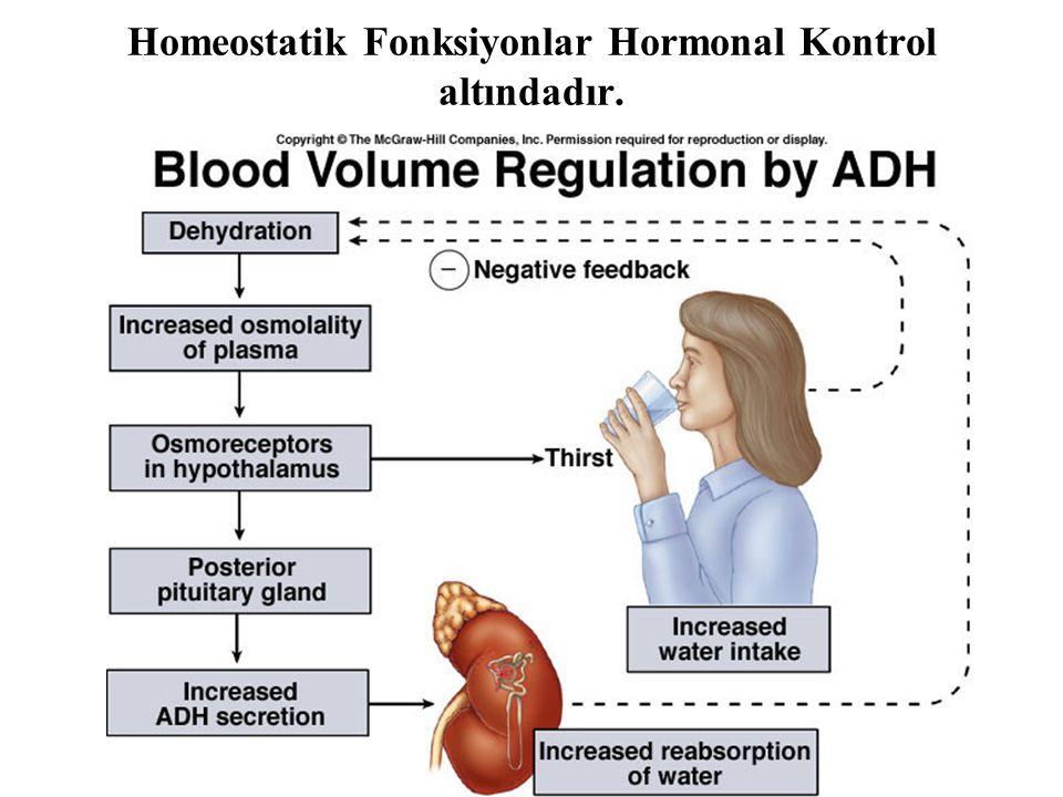 Homeostatik Fonksiyonlar Hormonal Kontrol altındadır.