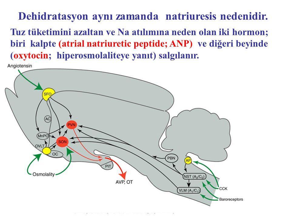 Tuz tüketimini azaltan ve Na atılımına neden olan iki hormon; biri kalpte (atrial natriuretic peptide; ANP) ve diğeri beyinde (oxytocin; hiperosmolali
