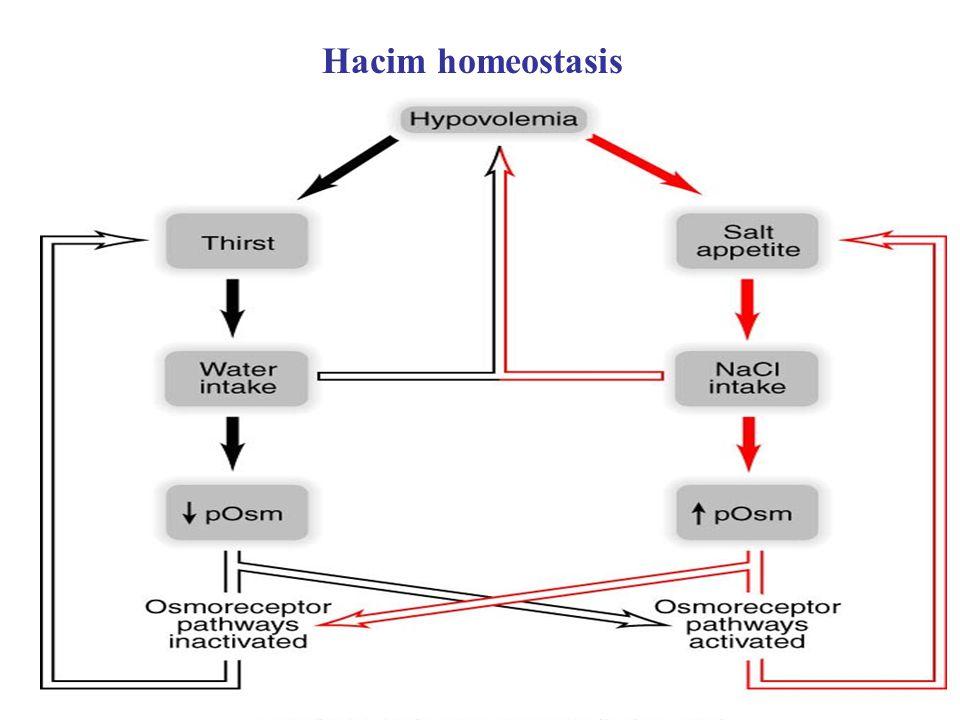 Hacim homeostasis