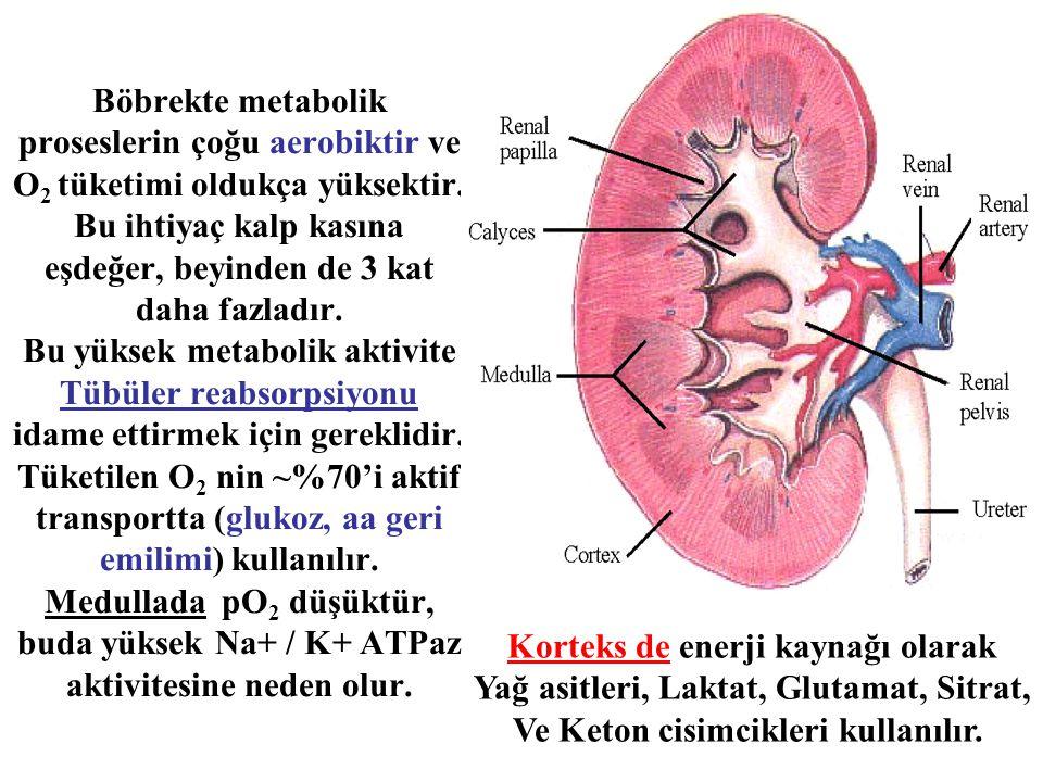 Böbrekte metabolik proseslerin çoğu aerobiktir ve O 2 tüketimi oldukça yüksektir. Bu ihtiyaç kalp kasına eşdeğer, beyinden de 3 kat daha fazladır. Bu