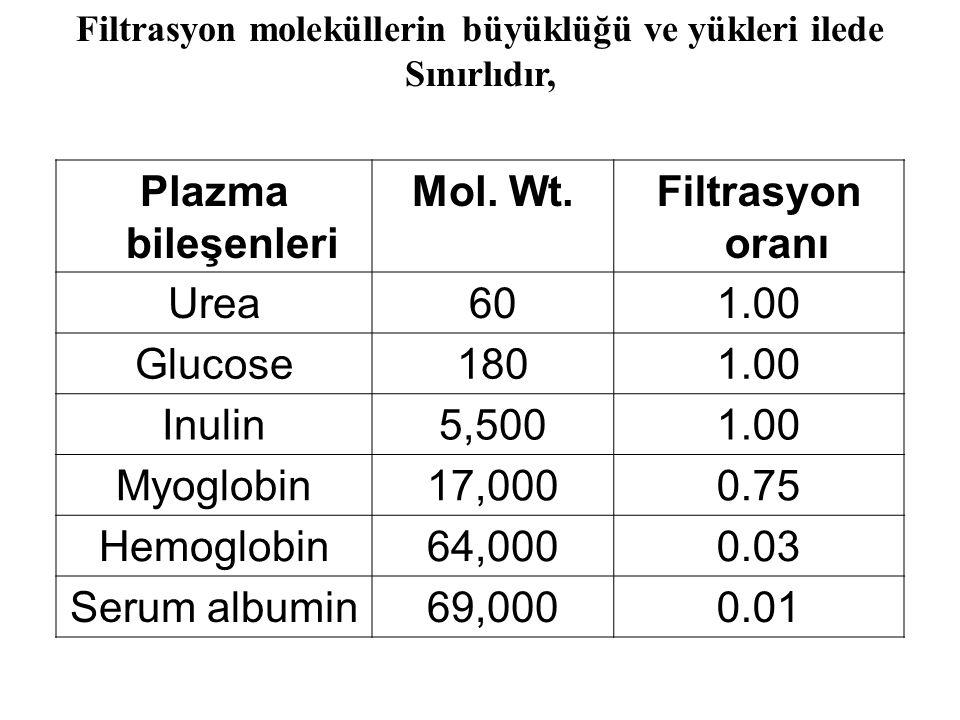 Plazma bileşenleri Mol. Wt.Filtrasyon oranı Urea601.00 Glucose1801.00 Inulin5,5001.00 Myoglobin17,0000.75 Hemoglobin64,0000.03 Serum albumin69,0000.01