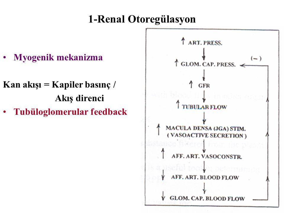 1-Renal Otoregülasyon Myogenik mekanizma Kan akışı = Kapiler basınç / Akış direnci Tubüloglomerular feedback