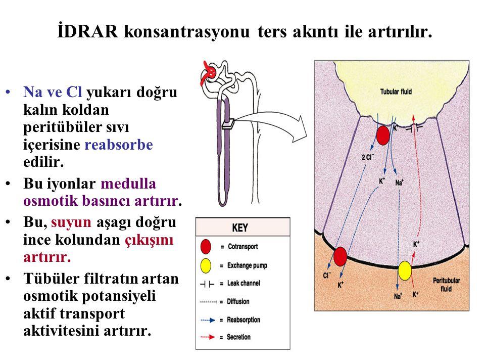 İDRAR konsantrasyonu ters akıntı ile artırılır. Na ve Cl yukarı doğru kalın koldan peritübüler sıvı içerisine reabsorbe edilir. Bu iyonlar medulla osm