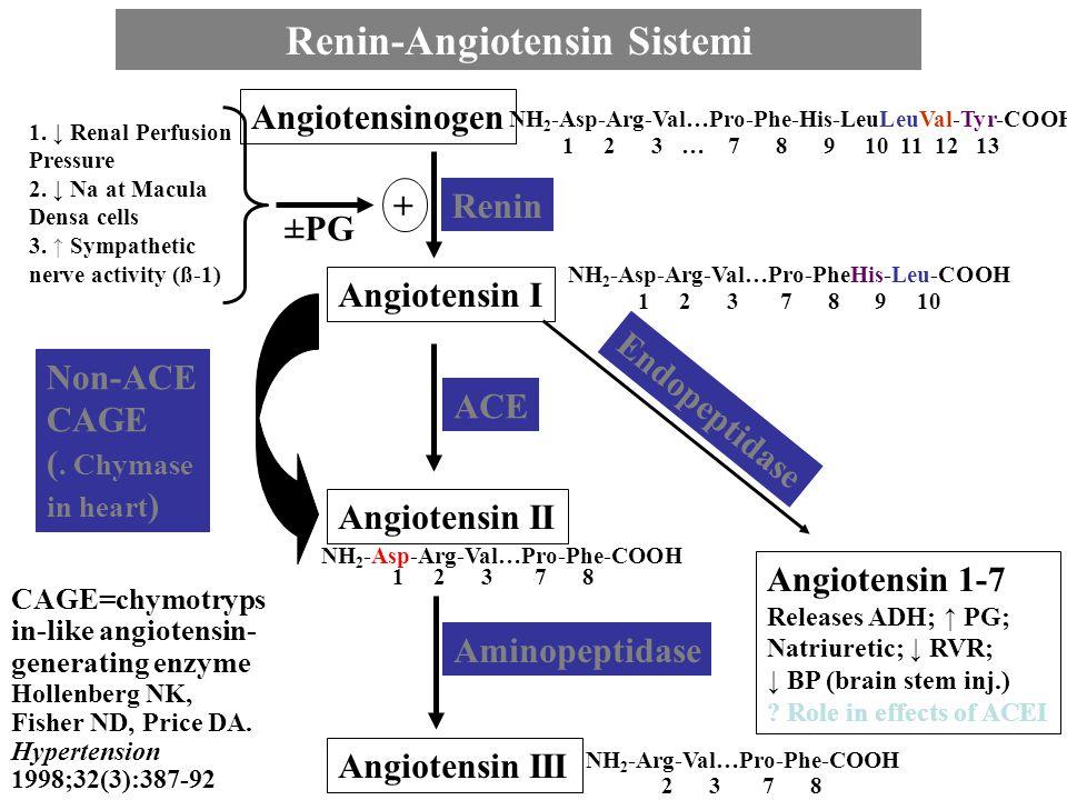 Angiotensinogen Angiotensin I Angiotensin II Angiotensin III Renin ACE Aminopeptidase Non-ACE CAGE (. Chymase in heart ) Endopeptidase Angiotensin 1-7