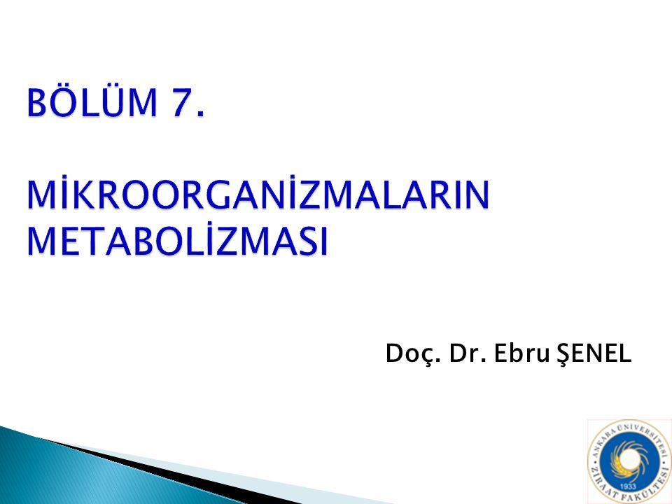 Doç. Dr. Ebru ŞENEL