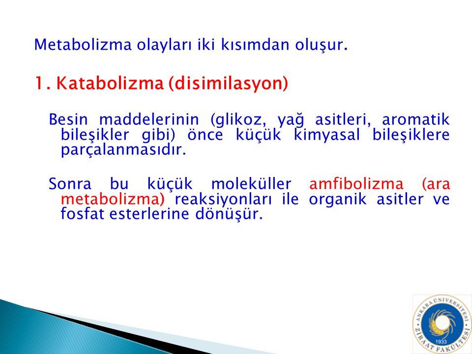 Metabolizma olayları iki kısımdan oluşur. 1. Katabolizma (disimilasyon) Besin maddelerinin (glikoz, yağ asitleri, aromatik bileşikler gibi) önce küçük