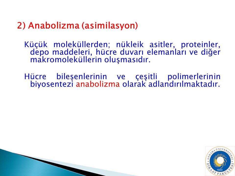 2) Anabolizma (asimilasyon) Küçük moleküllerden; nükleik asitler, proteinler, depo maddeleri, hücre duvarı elemanları ve diğer makromoleküllerin oluşm