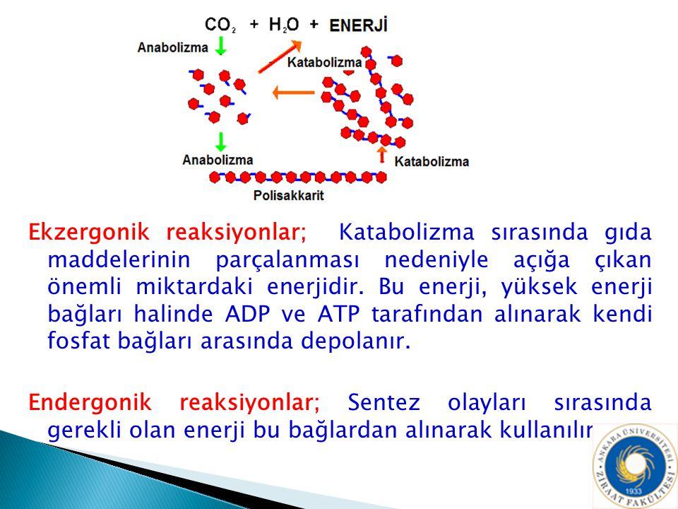 Ekzergonik reaksiyonlar; Katabolizma sırasında gıda maddelerinin parçalanması nedeniyle açığa çıkan önemli miktardaki enerjidir. Bu enerji, yüksek ene