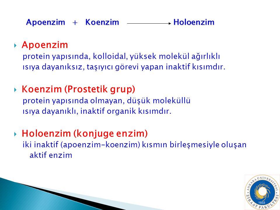 Apoenzim + Koenzim Holoenzim Apoenzim + Koenzim Holoenzim  Apoenzim protein yapısında, kolloidal, yüksek molekül ağırlıklı ısıya dayanıksız, taşıyıcı