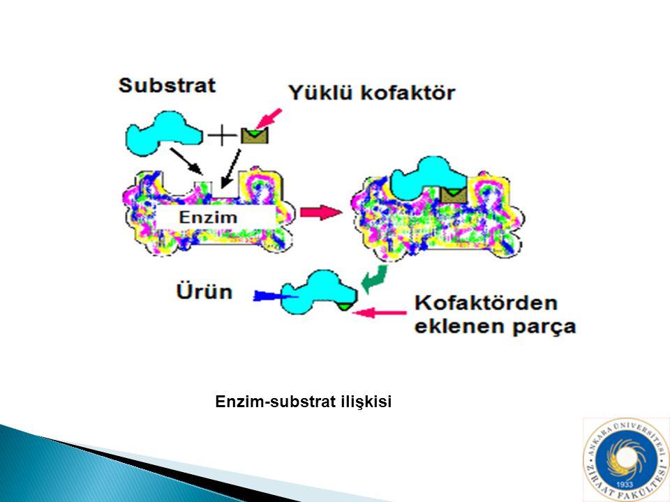 Enzim-substrat ilişkisi