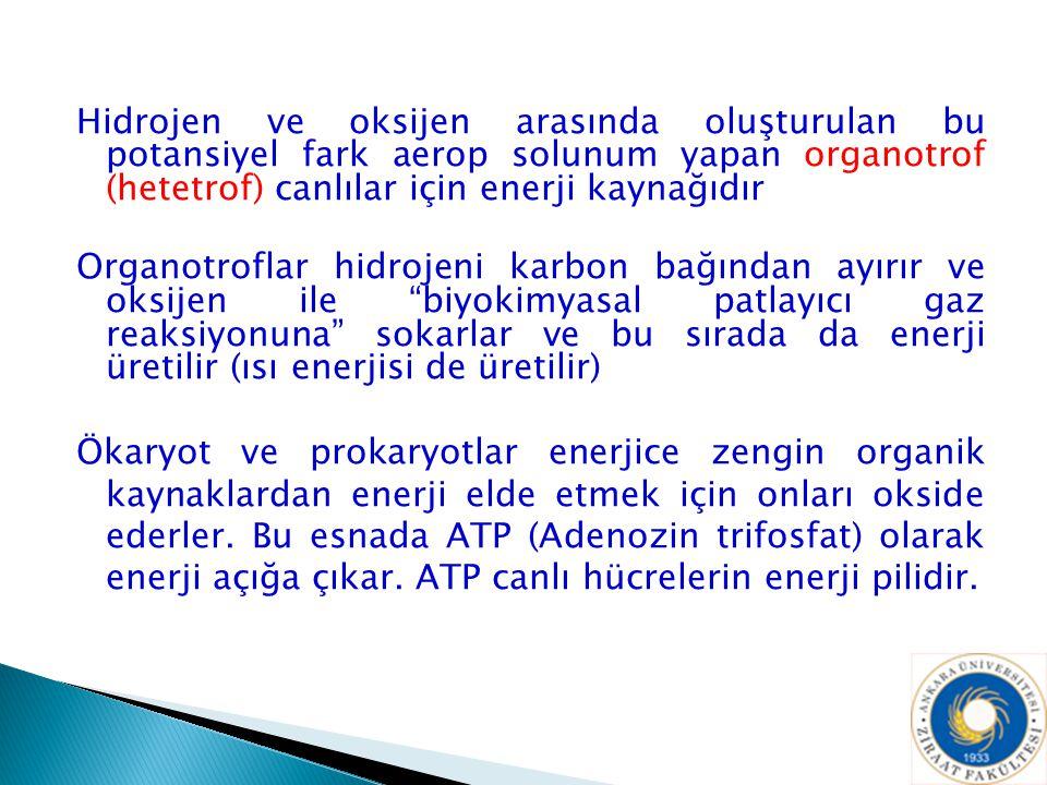 Hidrojen ve oksijen arasında oluşturulan bu potansiyel fark aerop solunum yapan organotrof (hetetrof) canlılar için enerji kaynağıdır Organotroflar hi