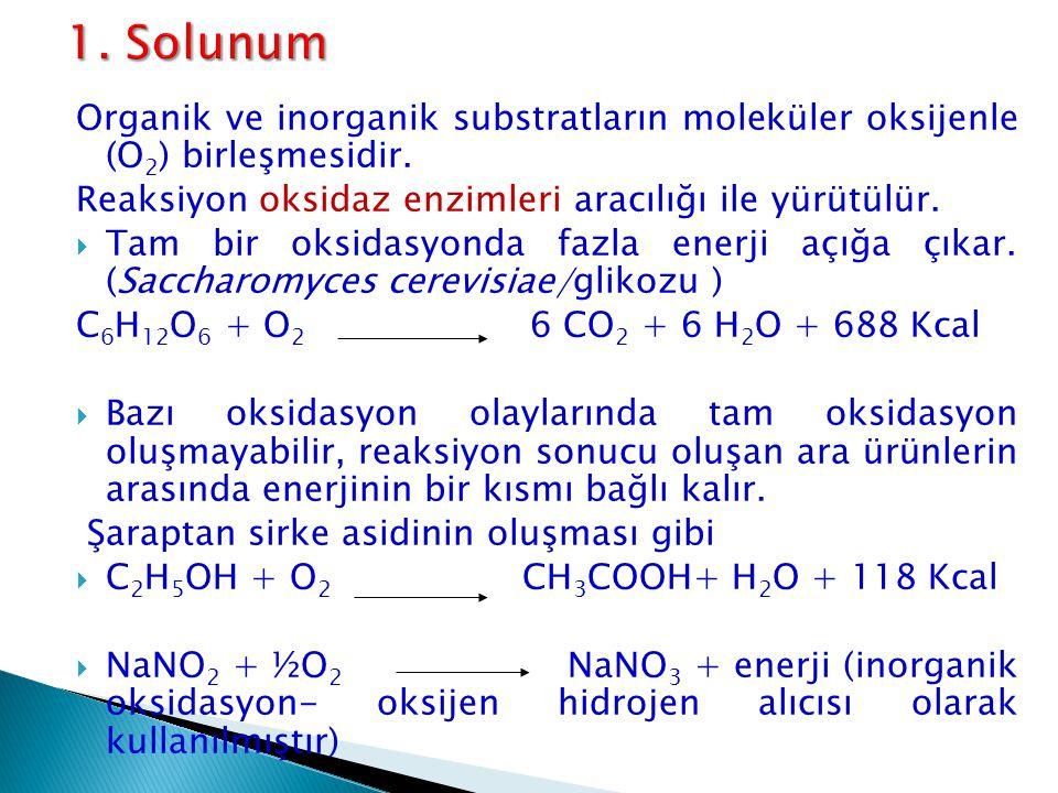 Organik ve inorganik substratların moleküler oksijenle (O 2 ) birleşmesidir. Reaksiyon oksidaz enzimleri aracılığı ile yürütülür.  Tam bir oksidasyon