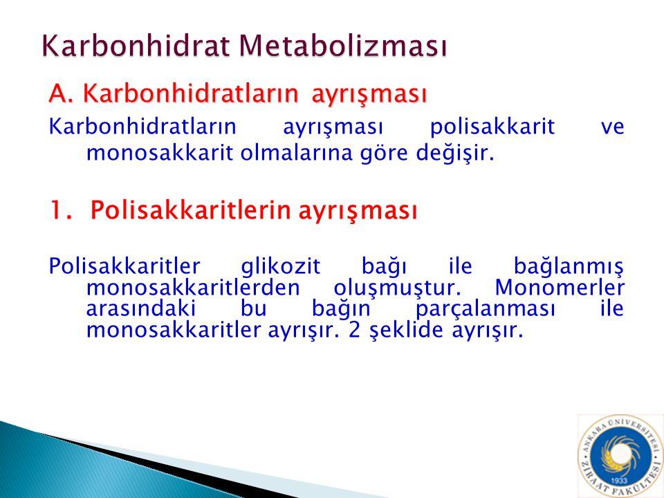 A. Karbonhidratların ayrışması Karbonhidratların ayrışması polisakkarit ve monosakkarit olmalarına göre değişir. 1. Polisakkaritlerin ayrışması Polisa