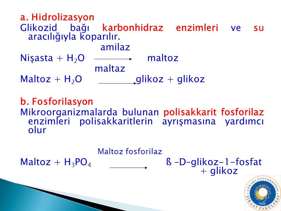 a. Hidrolizasyon Glikozid bağı karbonhidraz enzimleri ve su aracılığıyla koparılır. amilaz Nişasta + H 2 O maltoz maltaz Maltoz + H 2 O glikoz + gliko