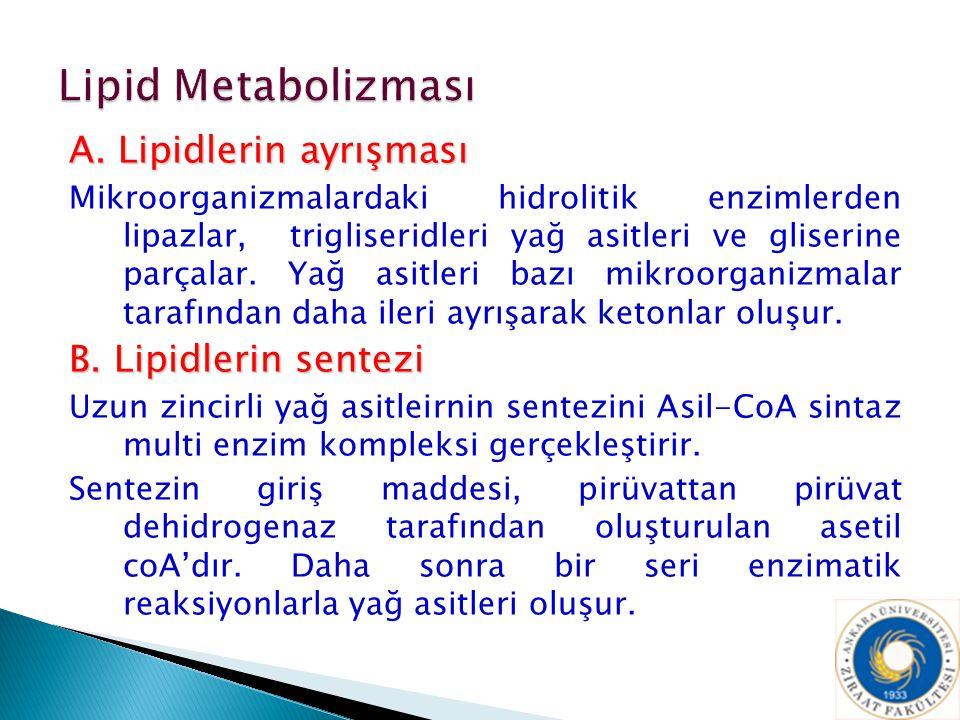 A. Lipidlerin ayrışması Mikroorganizmalardaki hidrolitik enzimlerden lipazlar, trigliseridleri yağ asitleri ve gliserine parçalar. Yağ asitleri bazı m