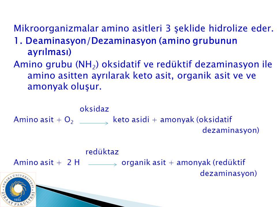 Mikroorganizmalar amino asitleri 3 şeklide hidrolize eder. 1. Deaminasyon/Dezaminasyon (amino grubunun ayrılması) Amino grubu (NH 2 ) oksidatif ve red