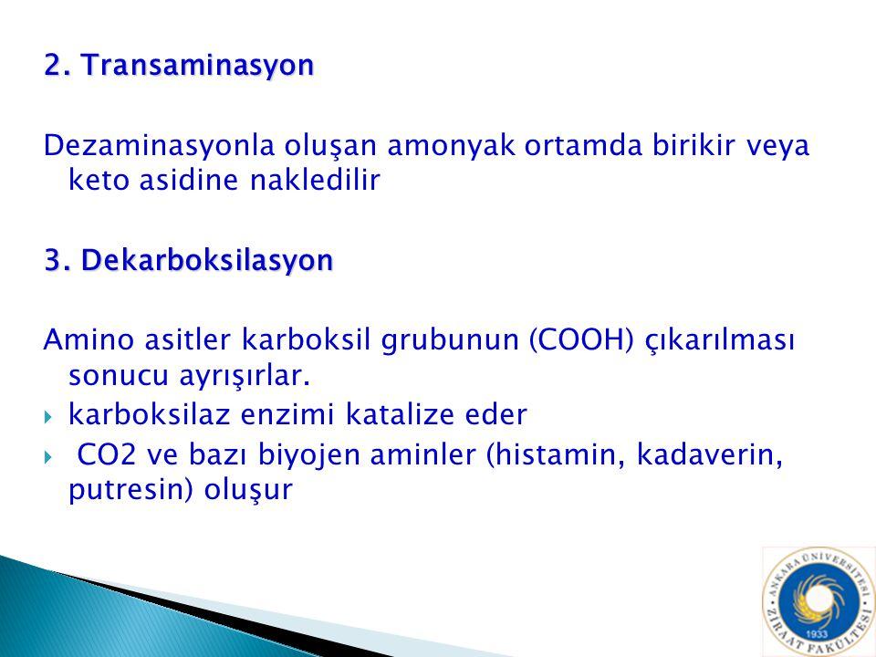 2. Transaminasyon Dezaminasyonla oluşan amonyak ortamda birikir veya keto asidine nakledilir 3. Dekarboksilasyon Amino asitler karboksil grubunun (COO