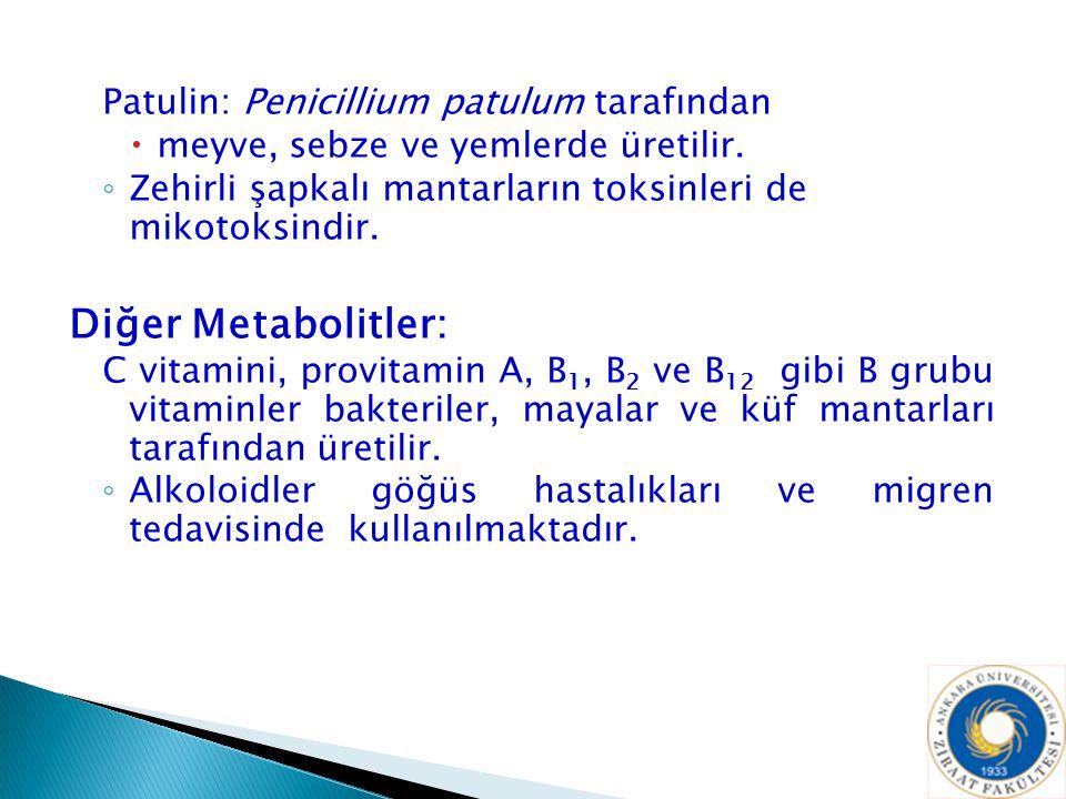 Patulin: Penicillium patulum tarafından  meyve, sebze ve yemlerde üretilir. ◦ Zehirli şapkalı mantarların toksinleri de mikotoksindir. Diğer Metaboli