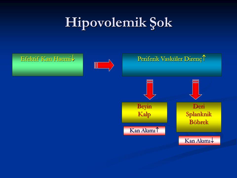 Efektif Kan Hacmi  Periferik Vasküler Direnç  Hipovolemik Şok BeyinKalp Kan Akımı  DeriSplanknikBöbrek Kan Akımı 
