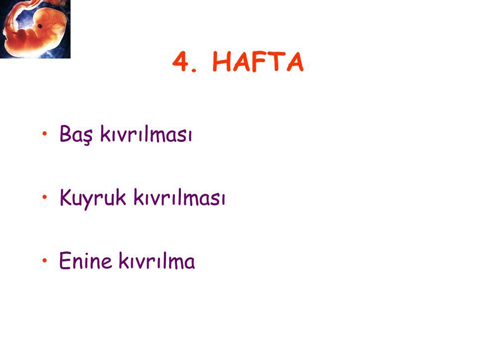 4. HAFTA Baş kıvrılması Kuyruk kıvrılması Enine kıvrılma