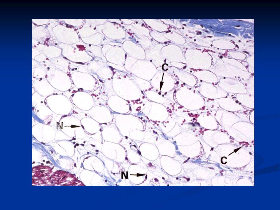 Dağılımları: Subkutan dokuda Subkutan dokuda Vücutta biriktiği yerler cins ve yaşa göre değişir Vücutta biriktiği yerler cins ve yaşa göre değişir Erkekte: boyunda kalça ve uylukta Erkekte: boyunda kalça ve uylukta Kadında.