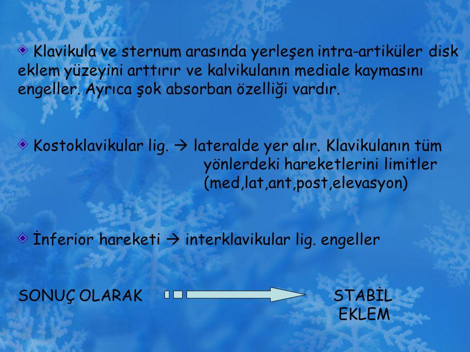 Klavikula ve sternum arasında yerleşen intra-artiküler disk eklem yüzeyini arttırır ve kalvikulanın mediale kaymasını engeller. Ayrıca şok absorban öz