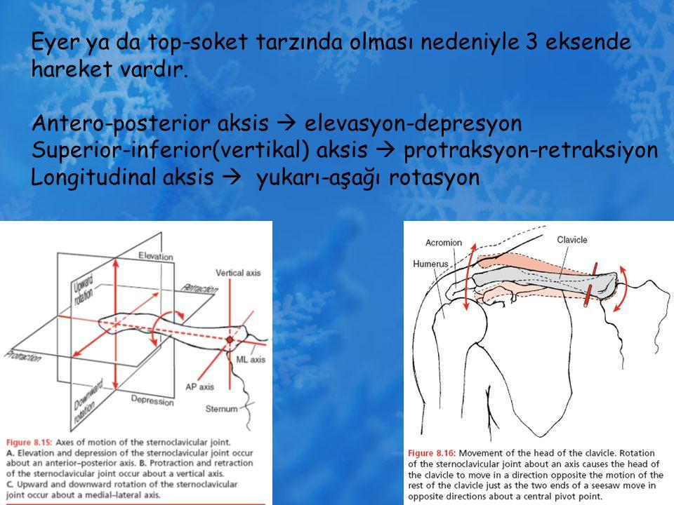 Eyer ya da top-soket tarzında olması nedeniyle 3 eksende hareket vardır. Antero-posterior aksis  elevasyon-depresyon Superior-inferior(vertikal) aksi