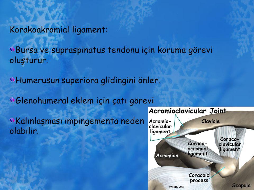 Korakoakromial ligament: Bursa ve supraspinatus tendonu için koruma görevi oluşturur. Humerusun superiora glidingini önler. Glenohumeral eklem için ça
