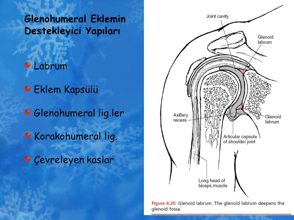 Glenohumeral Eklemin Destekleyici Yapıları Labrum Eklem Kapsülü Glenohumeral lig.ler Korakohumeral lig. Çevreleyen kaslar