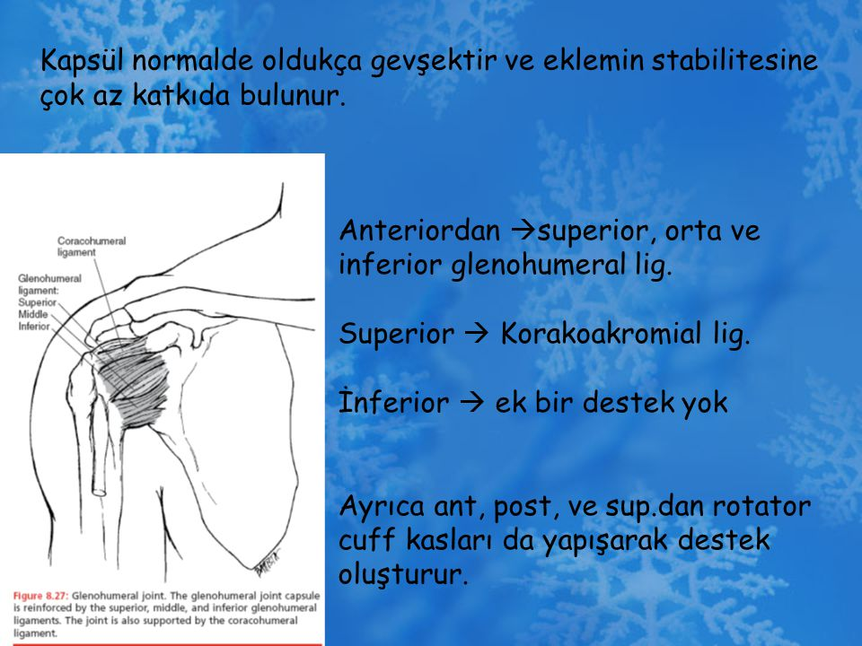 Kapsül normalde oldukça gevşektir ve eklemin stabilitesine çok az katkıda bulunur. Anteriordan  superior, orta ve inferior glenohumeral lig. Superior