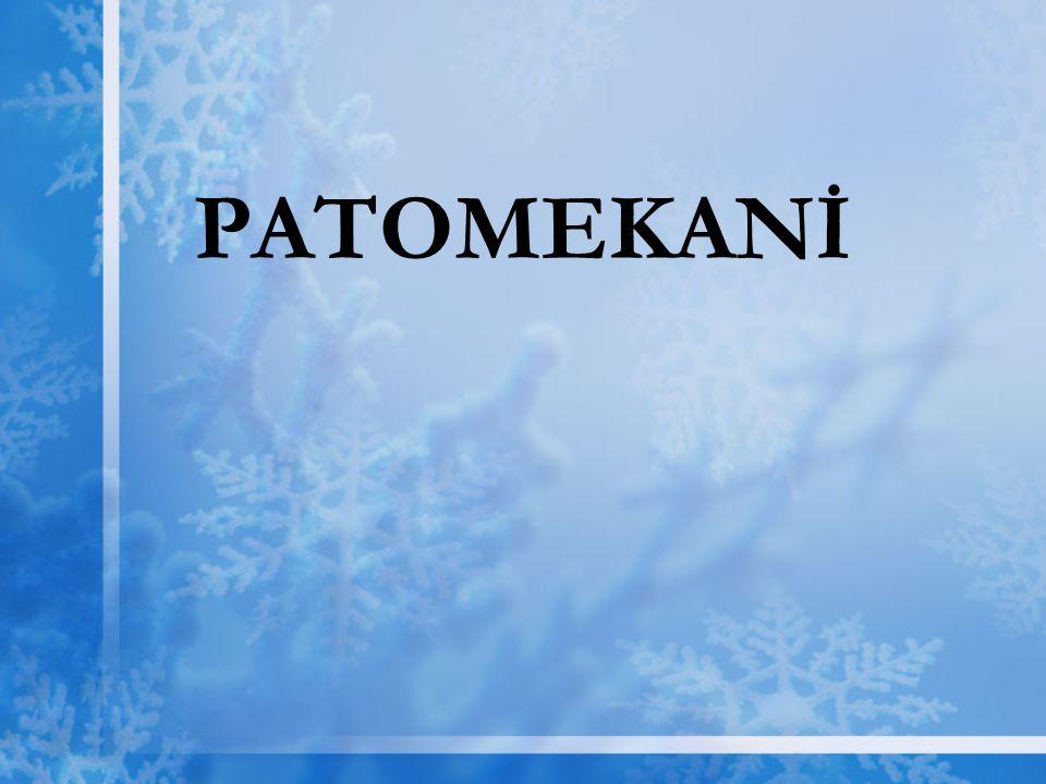 PATOMEKANİ