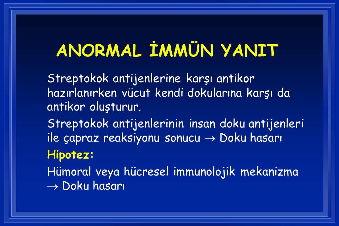 ANORMAL İMMÜN YANIT Streptokok antijenlerine karşı antikor hazırlanırken vücut kendi dokularına karşı da antikor oluşturur. Streptokok antijenlerinin