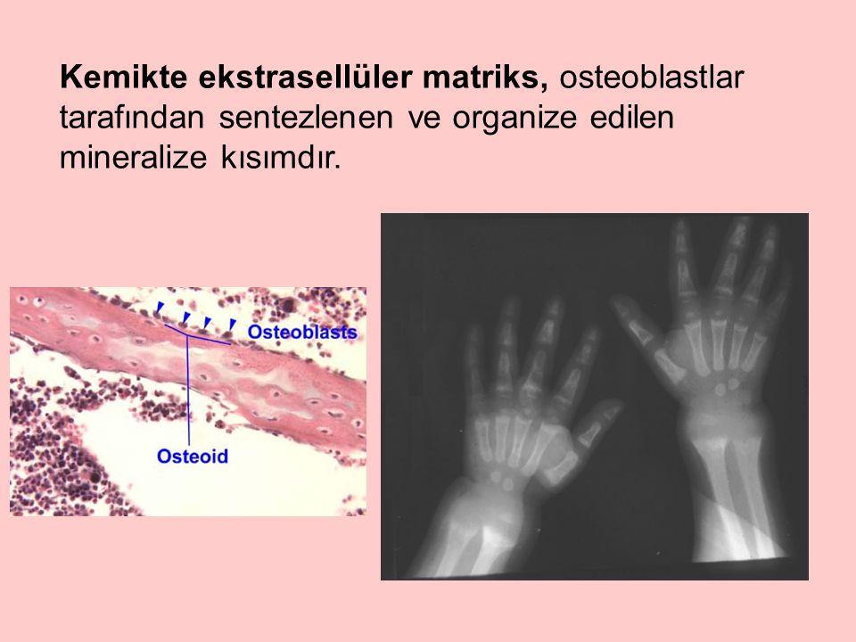 Kemikte ekstrasellüler matriks, osteoblastlar tarafından sentezlenen ve organize edilen mineralize kısımdır.