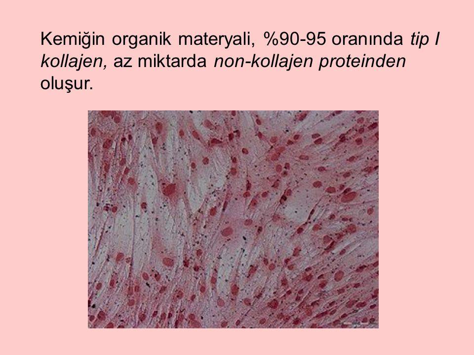 Kemiğin organik materyali, %90-95 oranında tip I kollajen, az miktarda non-kollajen proteinden oluşur.