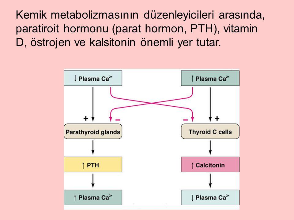 Kemik metabolizmasının düzenleyicileri arasında, paratiroit hormonu (parat hormon, PTH), vitamin D, östrojen ve kalsitonin önemli yer tutar.