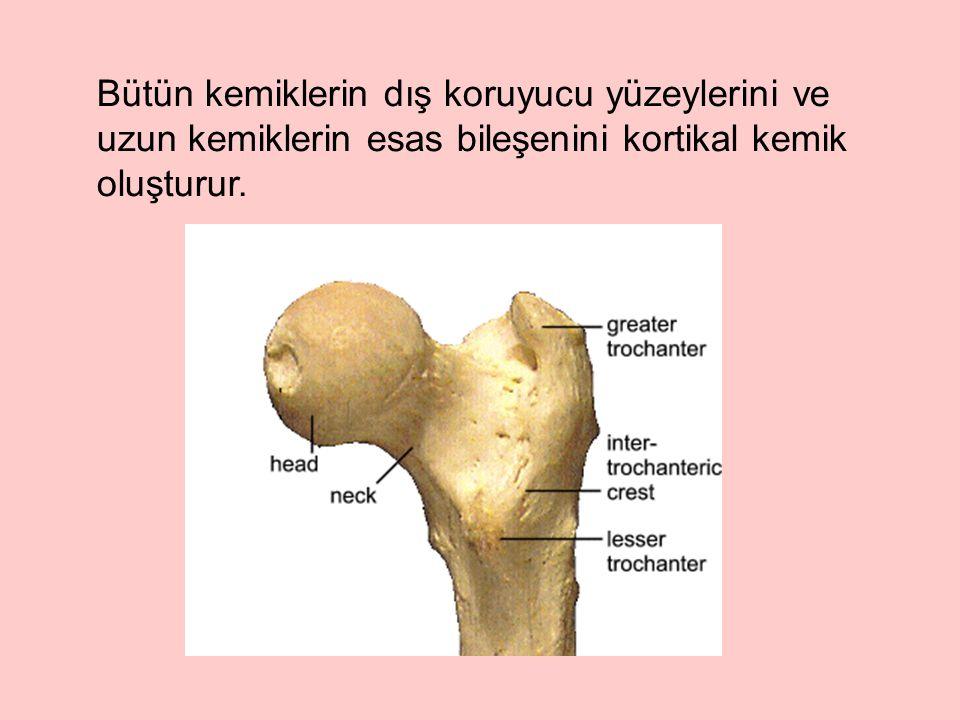 Trabeküler kemiğin sadece %5-20'si kalsifiye olduğu için kortikal kemikten daha az yoğundur.