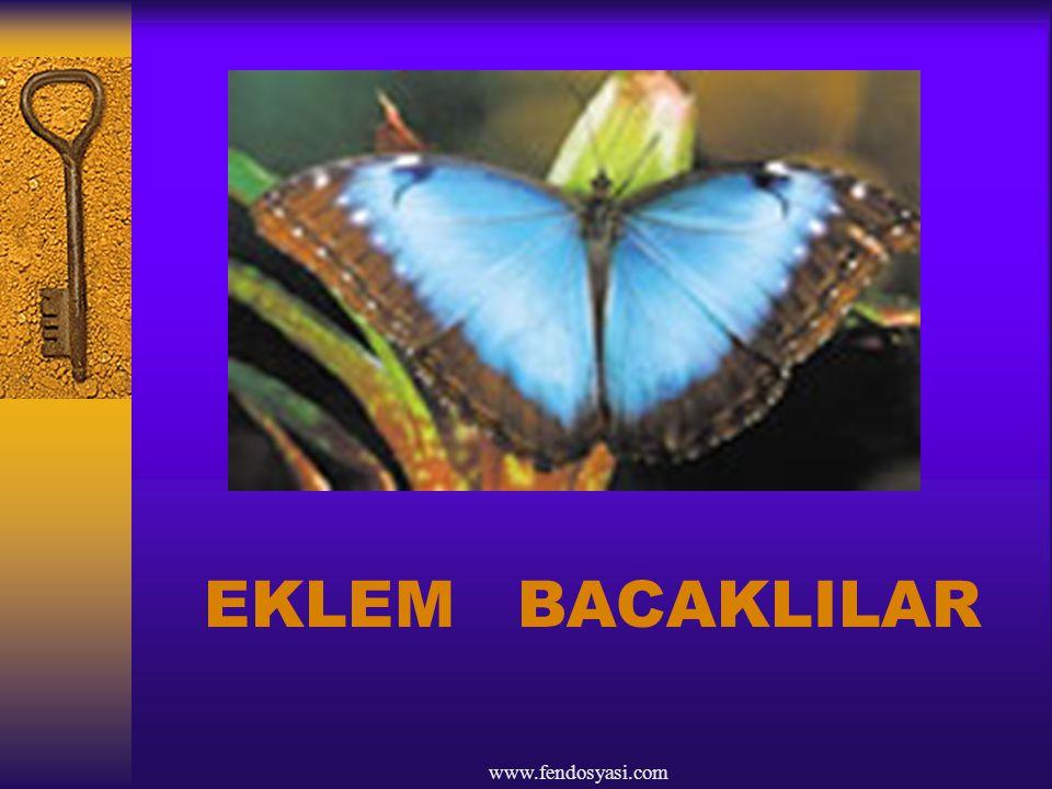 www.fendosyasi.com EKLEM BACAKLILAR